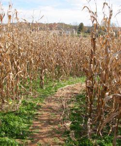 corn_maze_entrance